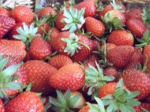 20160703 - Confiture de fraise - Fraises